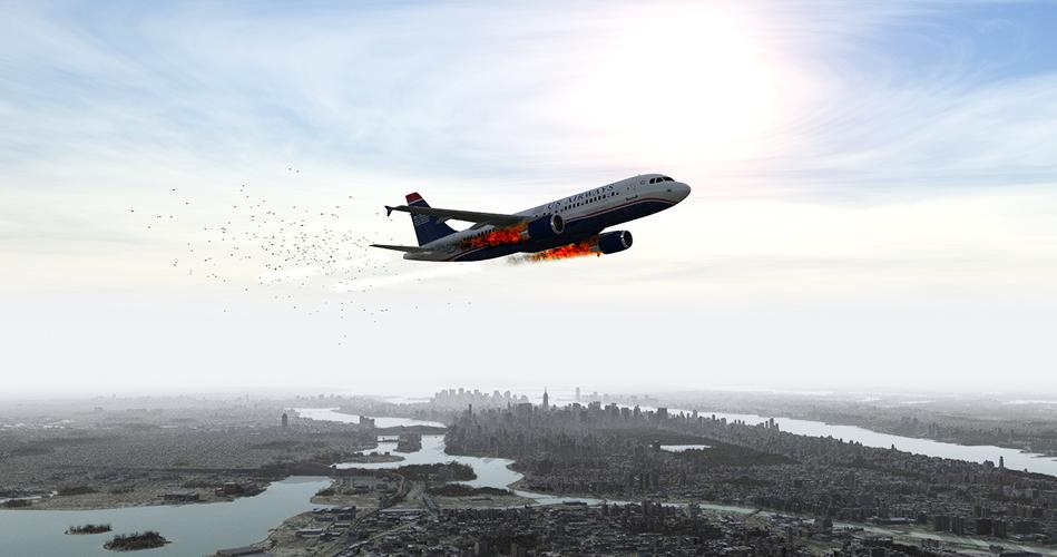 الحادثة: هجوم الطيور